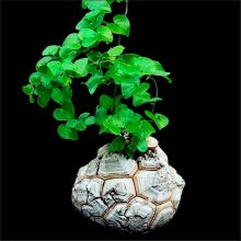 Dioscorea elephantipes Hottentot bread elephant's foot Seeds 2pcs