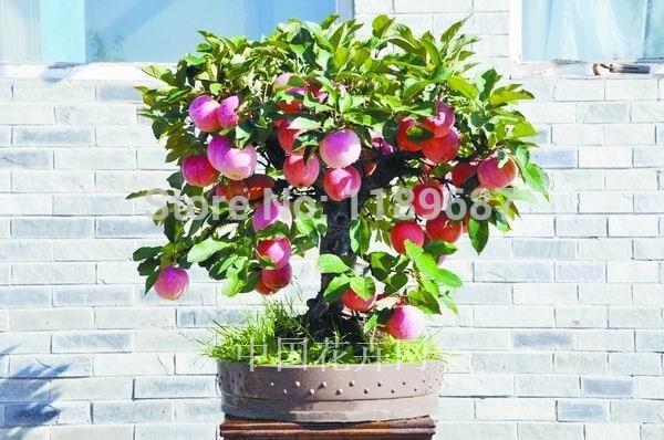 Mix of 9 popular Bonsai Tree Flower Seeds
