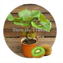 4 Different Bonsai Fruit Seeds 100pcs