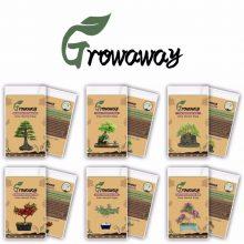 Mix of 15 Different Bonsai Seeds 85pcs total