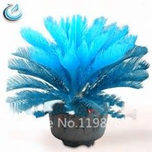 100pcs Blue Cycas Sago Palm Bonsai Tree Seeds