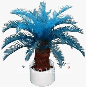 100pcs Blue Cycas Sago Palm Bonsai Tree Seeds Pure Bonsai