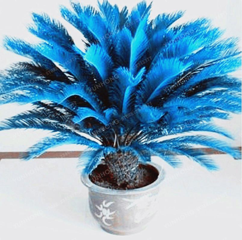 10 Pcs Blue Sago Palm Tree Bonsai Seeds