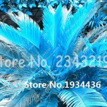 100pcs Mixed Sago Palm Tree Cycas Seeds