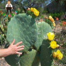 120Pcs Cactus Succulent Organic Ornamental Indoor Seeds