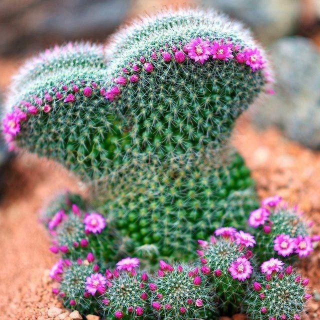 20 Pcs 17 Kinds Of Cactus Succulents Seeds