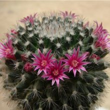 100 Mixed Cactus Seeds