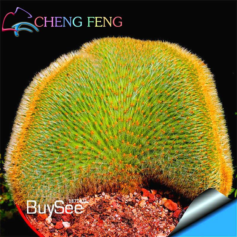 30pcs Cactus Rare Lithops Succulent Seeds
