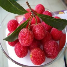 Strawberry Fruit Tree Arbutus seeds 10pcs