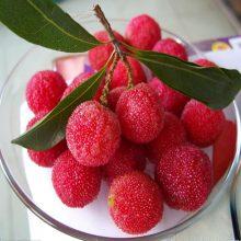 Strawberry Fruit Tree Arbutus seeds 10pcs