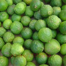 20Pcs Citrus Aurantifolia Key Lime Seeds