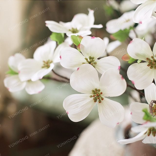 20Pcs Dogwood Cornelian Cherry Cornus Seeds