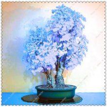 5Pcs Ginkgo Biloba Maidenhair Tree Seeds