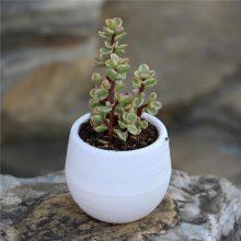 Mini Cute Succulents Fleshy Plants Flowerpot 7x7cm