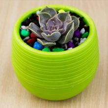 Mini Cute Succulents Fleshy Plants Flowerpot 7x7cm