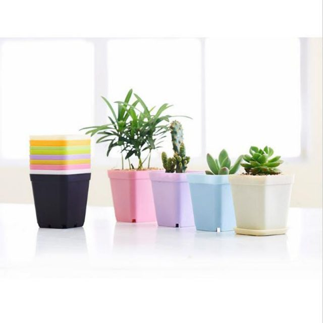 Colorful Fleshy Flower Nursery Pot 10Pcs